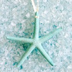 Natural Starfish Ornament Set in Aqua