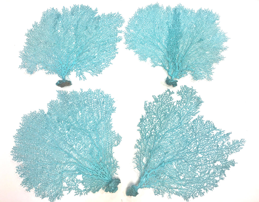 Natural Sea Fan Painted Aqua
